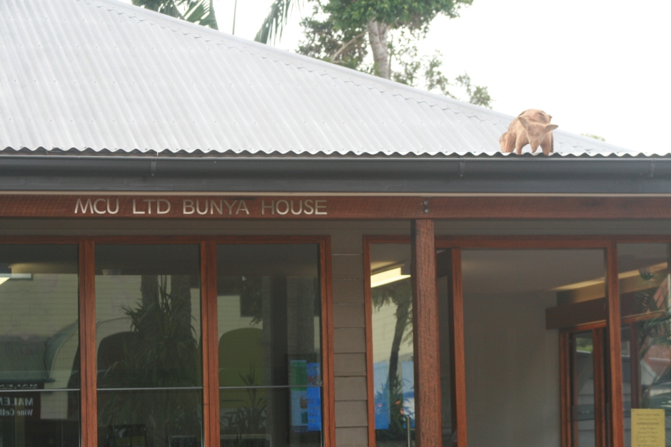 Bank shop front possum