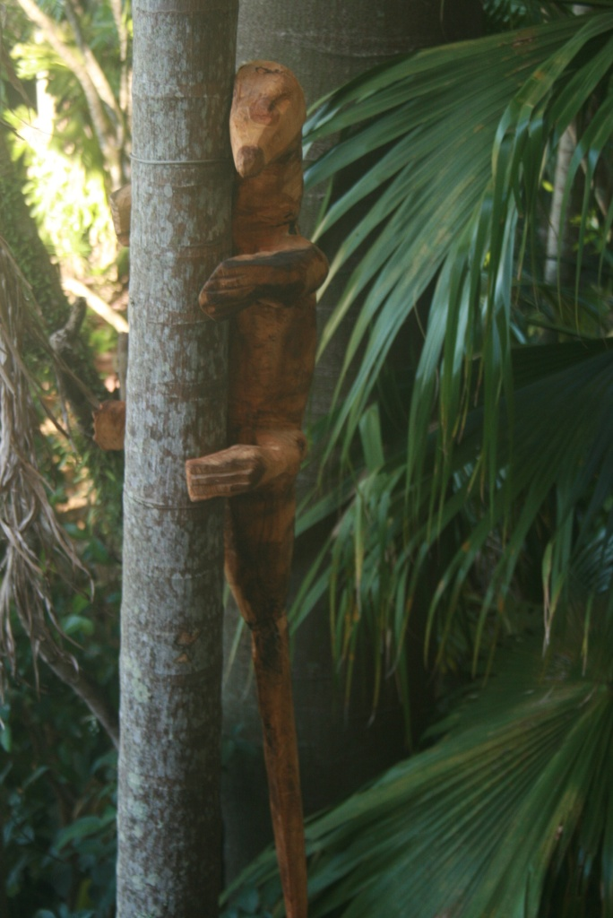 goanna up tree