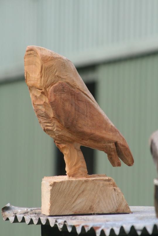 Owl pic for mattyginc