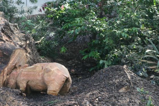 qut wombat