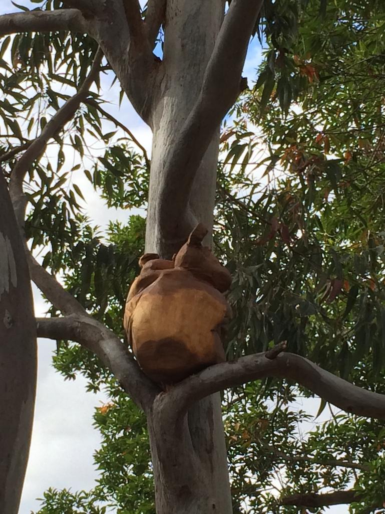 Koala QUT